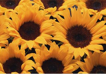 تصاویر جدید زیباسازی وبلاگ , سایت پیچك » بخش تصاویر زیباسازی » سری هفتم www.pichak.net كلیك كنید