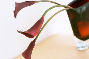 تصاویر جدید زیباسازی وبلاگ , سایت پیچک » بخش تصاویر زیباسازی » سری هفتم www.pichak.net کلیک کنید
