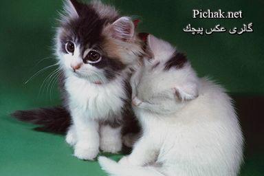 http://pichak.net/gallery/albums/userpics/10001/771067.JPG