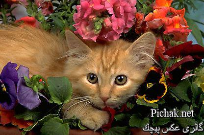 http://pichak.net/gallery/albums/userpics/10001/KIMB_736.JPG