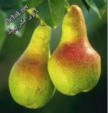 Pears50[1].jpg